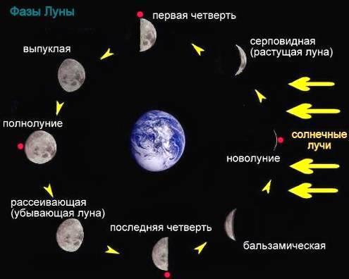 машонку, в какой фазе находиться луна сегодня трахают попки